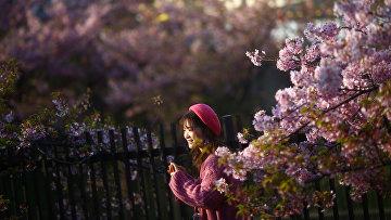 Цветение в Киото, Япония