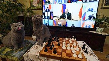 Трансляция совещания президента РФ В. Путина с руководителями субъектов РФ