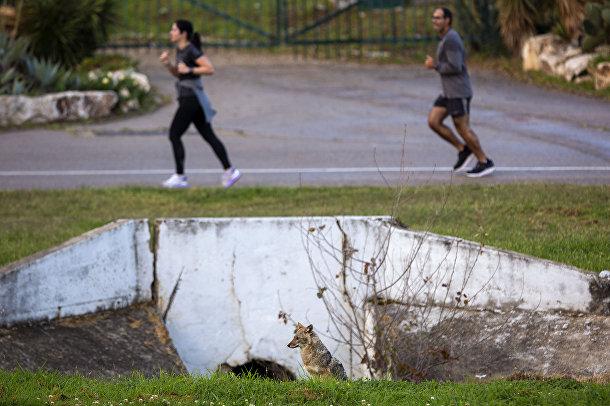 Люди во время занятий спортом рядом с шакалом в парке Ха Яркон в Тель-Авиве