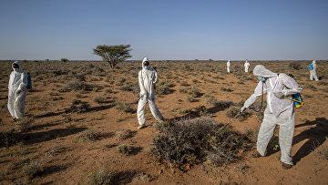 Люди в защитных костюмах обрабатывают растения в Сомали