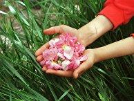 Иранская девушка держит лепестки роз в Камсаре