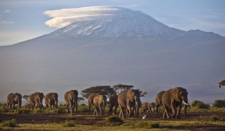 Слоны на фоне горы Килиманджаро в Танзании