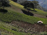 Кокаиновая ферма в Хуанкане, Боливия