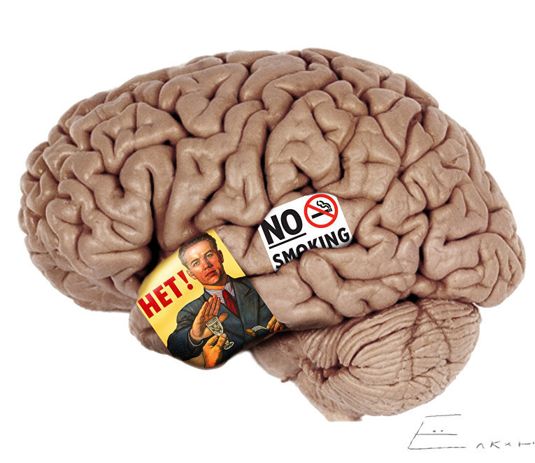 Американские ученые впервые сумели доказать, что в головном мозге человека есть отделы, которые отвечают за подавление тяги к чему-либо