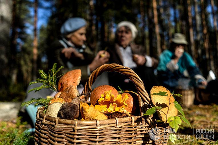 Грибы, собранные жителями Новгородской области в лесу