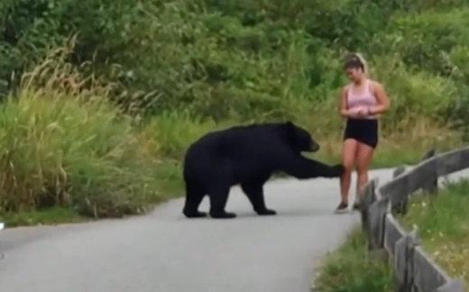 Медведь потрогал девушку
