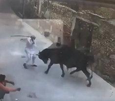 Бык бросается на человека