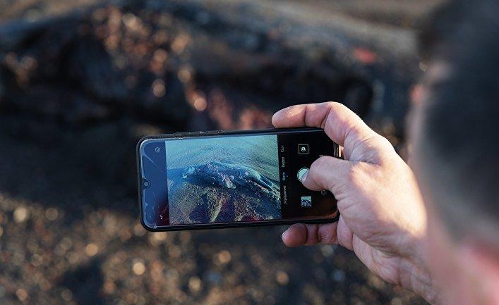 Мужчина фотографирует погибшую ларгу, выброшенную на берег Халактырского пляжа на полуострове Камчатка