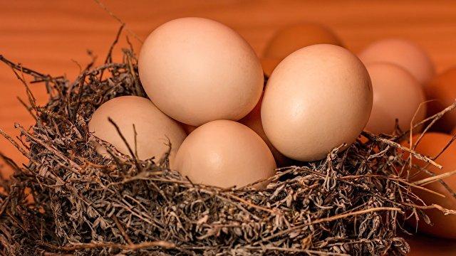 Sohu (Китай): как правильно выбрать свежие куриные яйца Узнайте об этих трех способах и выберите подходящий себе!