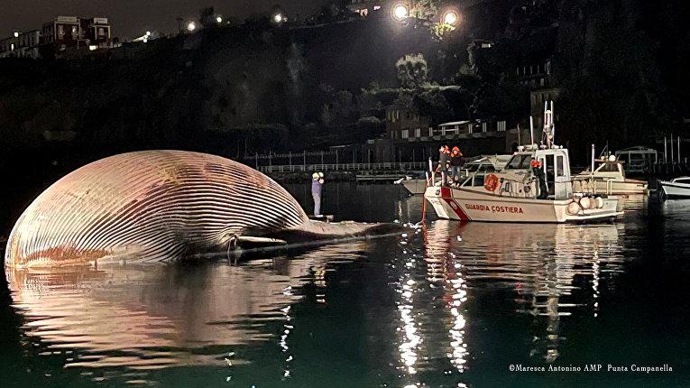 19 января 2021. Мертвый кит в Неаполитанском заливе, Италия