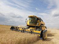 Уборка пшеницы на Украине