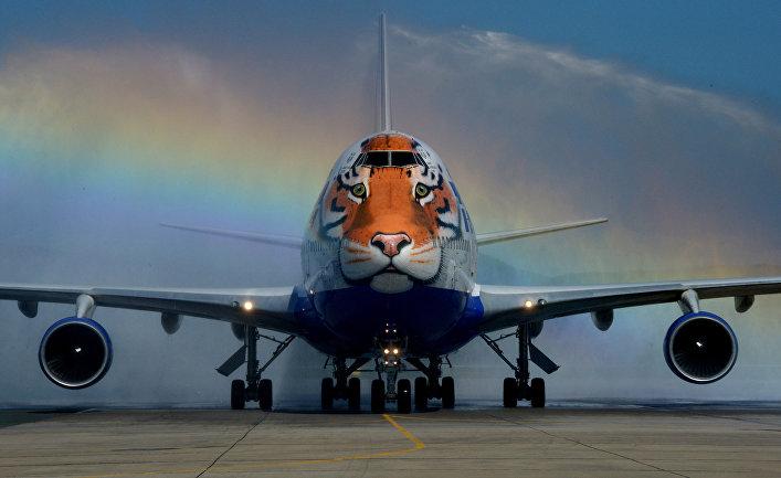 Самолет авиакомпании «Трансаэро», украшенный уникальным изображением амурского тигра