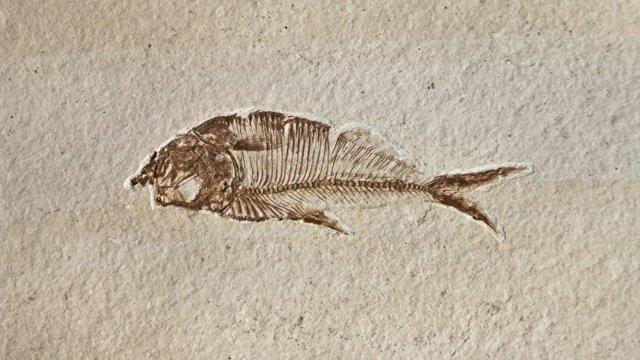 Al Arabiya (ОАЭ): ученые обнаружили в египетской пустыне окаменелости древних рыб, обитавших в горячих водах