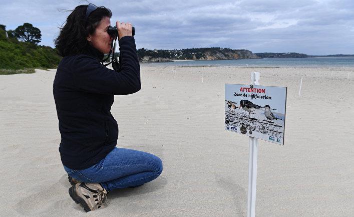 Сотрудник природного парка наблюдает за птицами на пляже Крозона, Франция