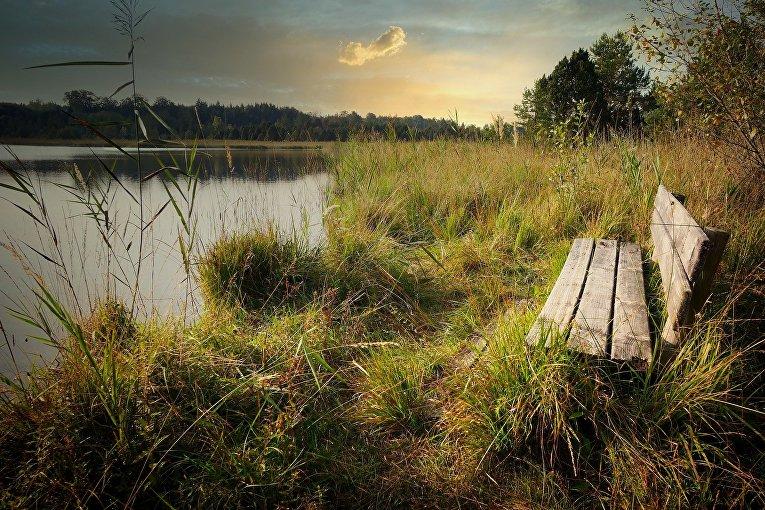 Избегайте источников воды и кустов